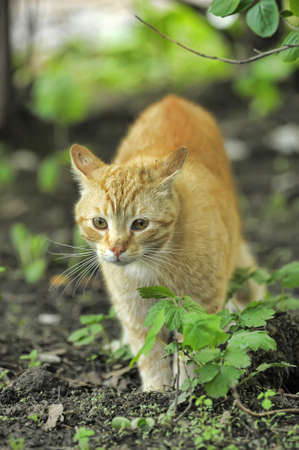 Cat take a walk on the grass close up Stock Photo - 21025559