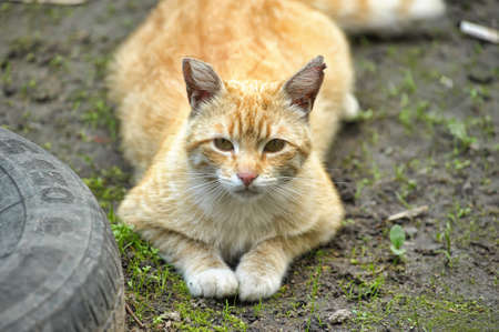Cat take a walk on the grass close up Stock Photo - 21025567