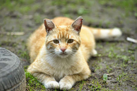 Cat take a walk on the grass close up Stock Photo - 21025575