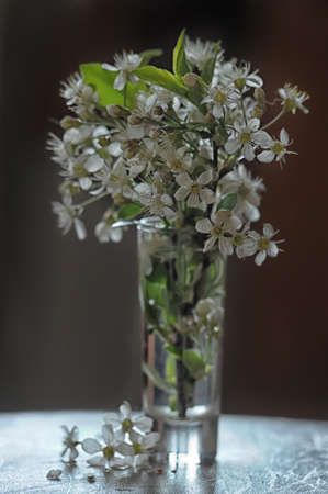 blooming twig in a glass photo