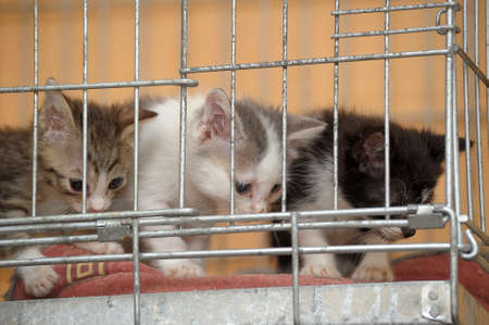 waif: kittens in a cage