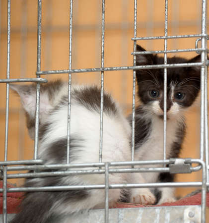 Two small kittens in a cage photo