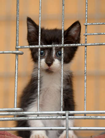 little kitten in a cage photo