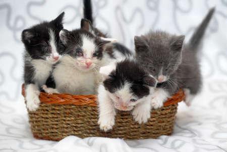 five kittens in a basket photo