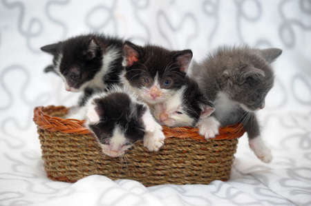 five kittens in a basket photo
