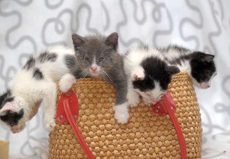 kittens in a wicker basket photo