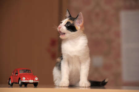 kitten and toy car photo