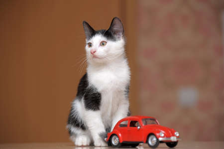 black and white kitten and toy car photo