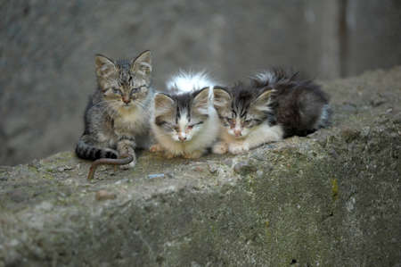 Three homeless kitten in the street