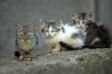 Three homeless kitten in the street photo