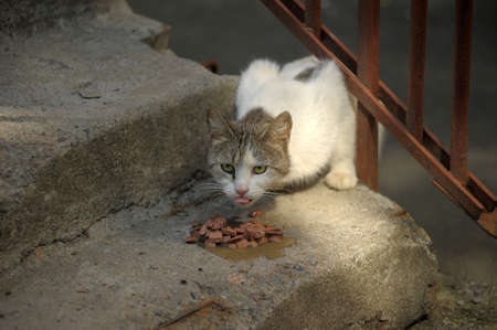 stray cat eats on the stairs photo