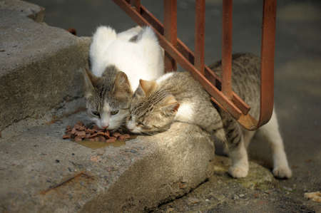 stray cats eats on the stairs photo