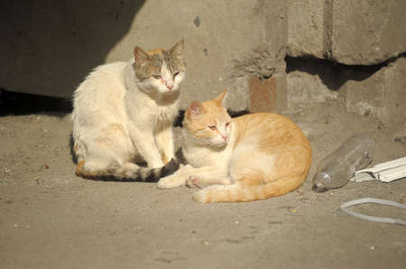 Two stray cats on the street photo
