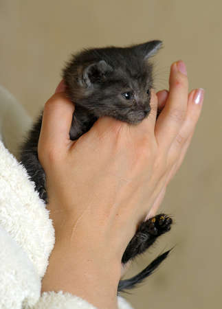 Cute kitten in womans hands photo
