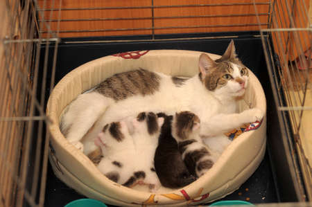 teat: cat with kittens Stock Photo