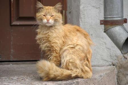 undomestic: Homeless cat into mats in the street