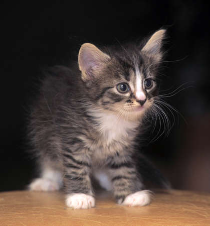 cute fluffy tabby kitten photo