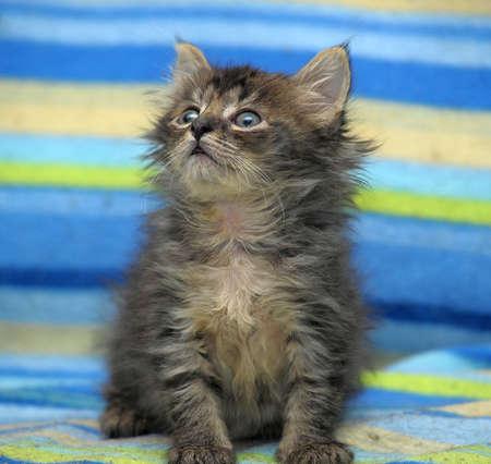 Portrait of a cute gray kitten photo