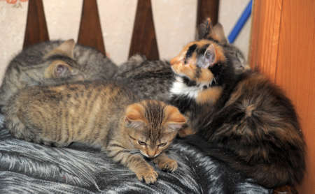 Kittens lying on the couch photo