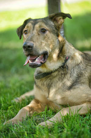 unleashed: light brown crossbreed dog for a walk