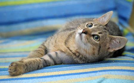 cute little tabby kitten photo