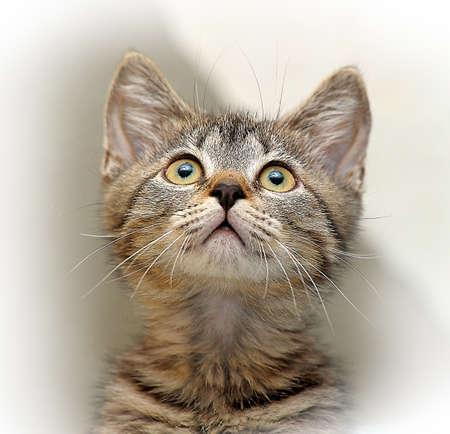 delinquent: cute little tabby kitten