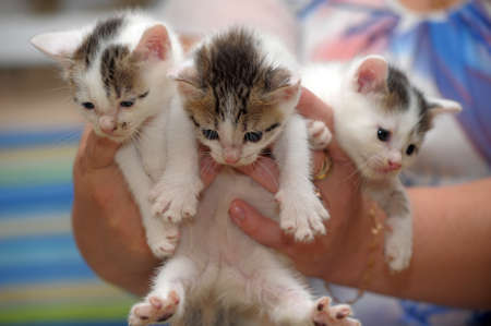three kittens in hands Stock Photo - 21991484