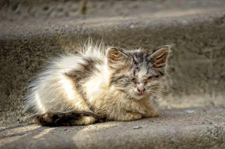 plainness: sick unhappy kitten in the street