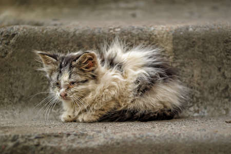 sick unhappy kitten in the street photo
