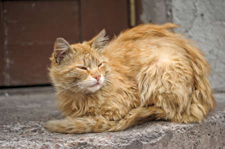 undomestic: Homeless cat into mats in the street