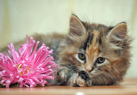 thoroughly: Fluffy kitten with a flower