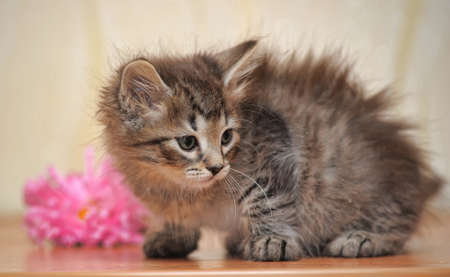 Fluffy kitten with a flower photo