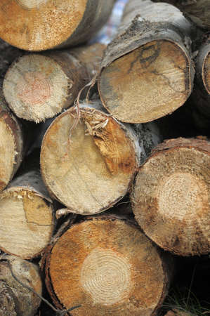 felled: felled trees Stock Photo