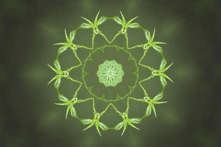 light blue lingerie: green circular pattern