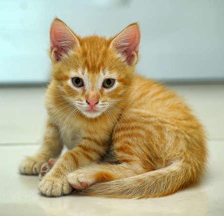 snooping: wonderful ginger kitten