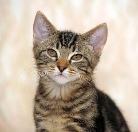 striped kitten Stock Photo - 21958546