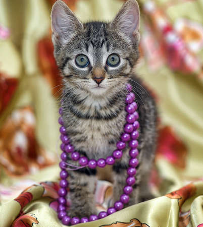 miaul: striped kitten and beads