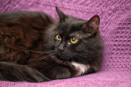 fluffy black kitten photo