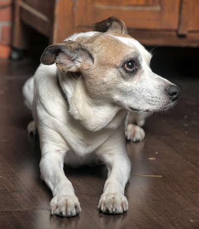 Mixed breed dog sitting indoors photo
