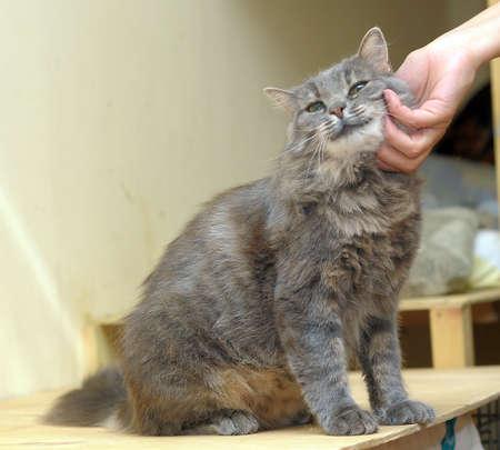 caresses: stroking a cat