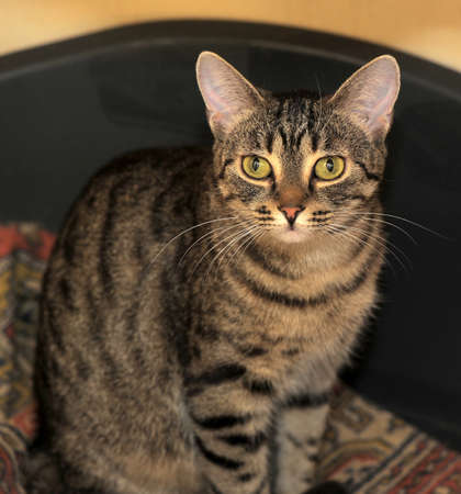 faultless: tabby cat with expressive eyes Stock Photo