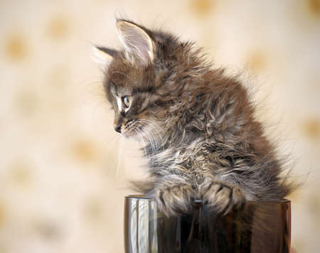 kitten in a cup photo