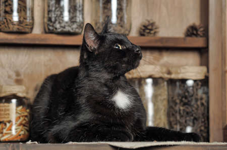 Chic black cat lying on a wooden surface. photo