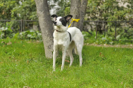 White dog with black spots on the nature photo