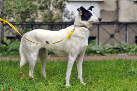 half breed: White dog with black spots on the nature