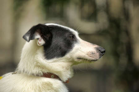 best shelter: White dog with black spots on the nature