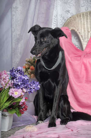 Elegant black dog on a background of flowers photo