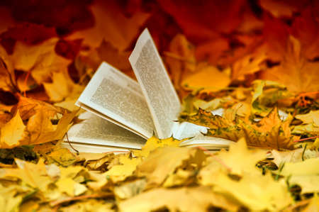 Open book on a bench and autumn leaves photo