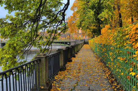 garish: Tree branches with autumn leaves hanging over the Fontanka River, Summer Garden, St  Petersburg, Russia,