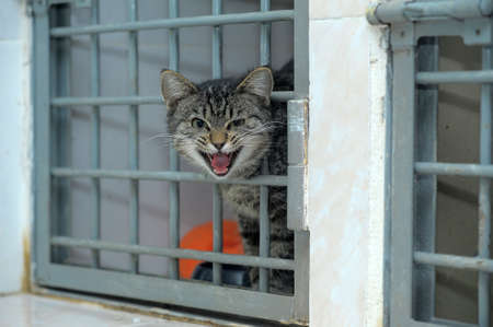 Cat pokes his head out of the cage at the shelter, asked to take him home photo